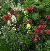 Emma Darwin's garden